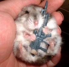 armed hamster