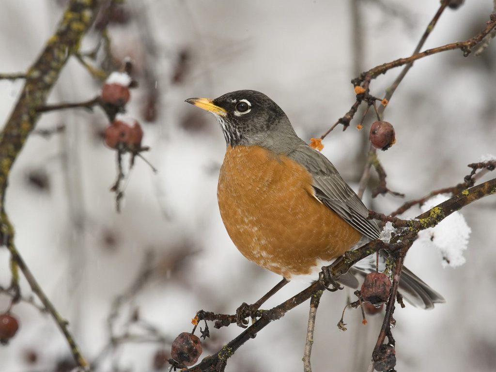 Arctic Bird Watching in New York - Gowanus Lounge