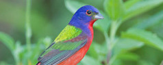 Rare Bird Blows into Brooklyn
