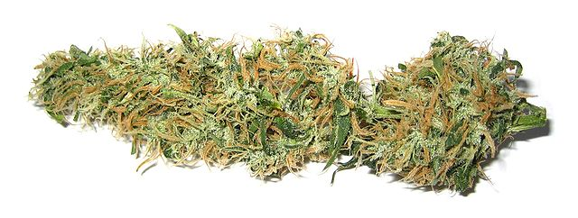 Dried marijuana bud.