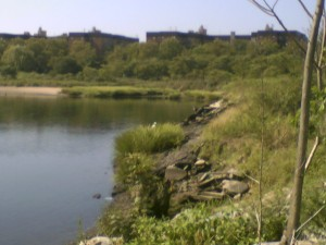 The bank of the Salt Marsh, which is closest to the Avenue U and Marine Park. Photo by GK tramrunner229