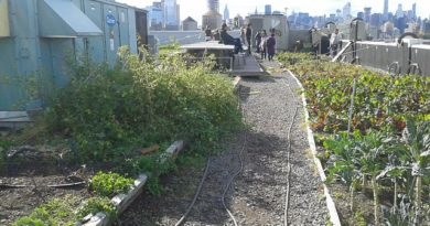Brooklyn's Largest Rooftop Vegetable Garden Opens in Sunset Park
