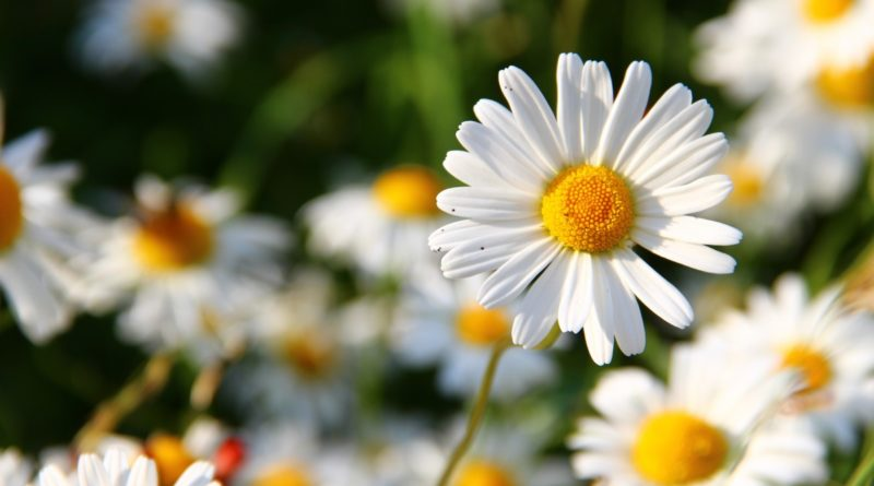Flower Power: What is your birth flower?